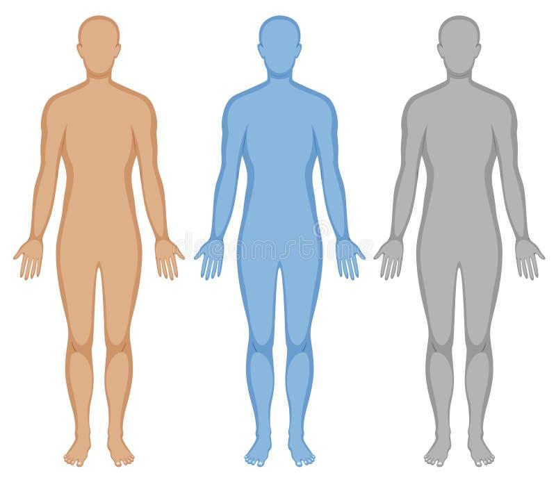 Ciało ludzkie kontur w trzy kolorach royalty ilustracja