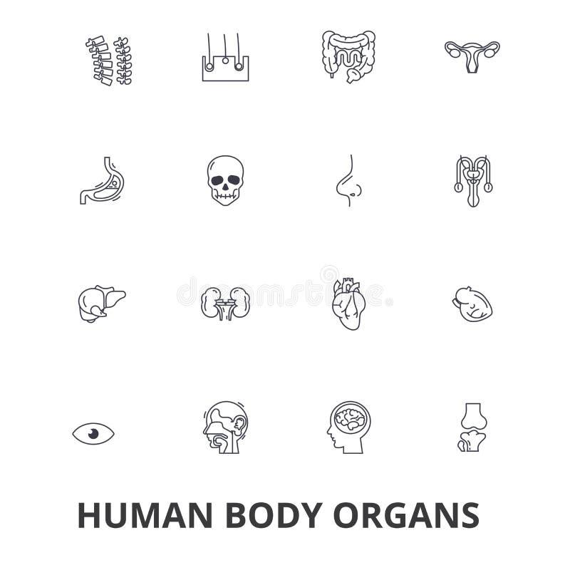Ciało ludzkie organy, ciało ludzkie, medyczna, ludzka anatomia, ciało system, części ciała kreskowe ikony Editable uderzenia Płas royalty ilustracja