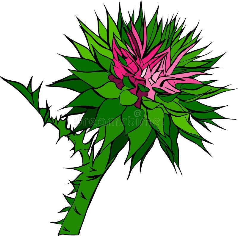 Ciaśni pączki kwiatu łopian royalty ilustracja