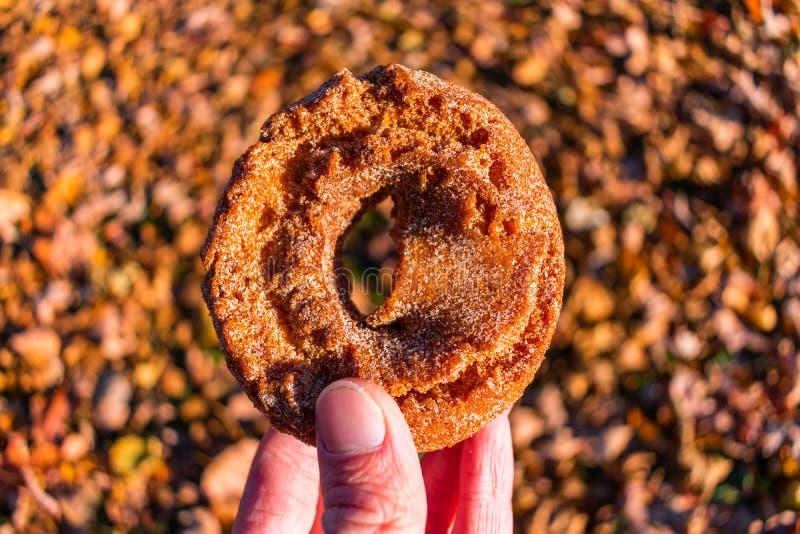 Ciambella del sidro di Apple mantenuta un fondo di Autumn Leaves variopinto fotografie stock libere da diritti