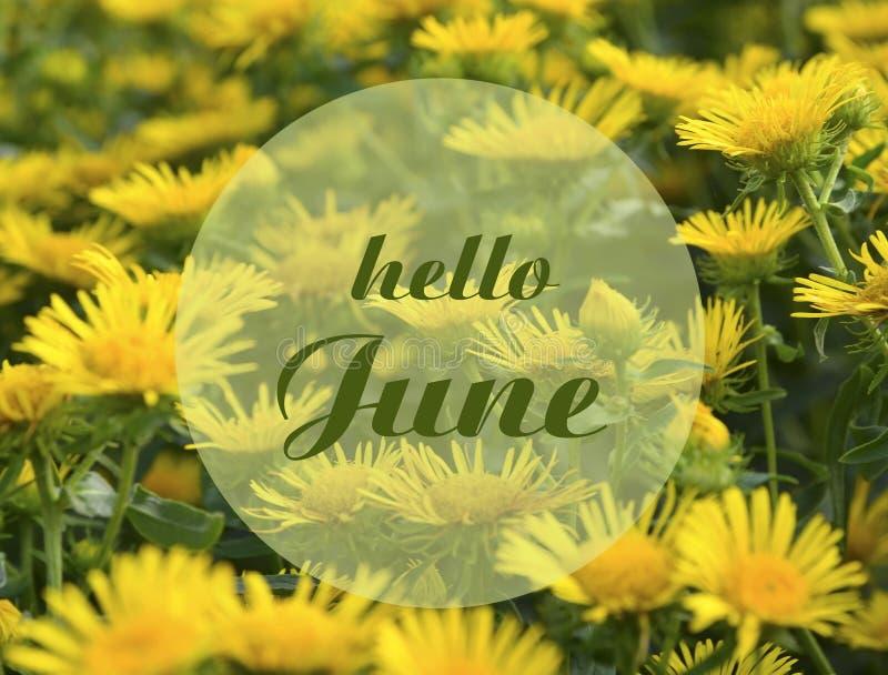 Ciao cartolina d'auguri di giugno con testo sui fiori gialli di un'estate sui precedenti floreali naturali del prato Concetto di  royalty illustrazione gratis