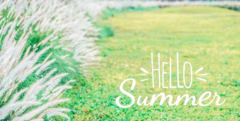 Ciao concetto del fondo di estate Bello fondo di estate della natura del fiore dell'erba verde con ciao estate illustrazione vettoriale