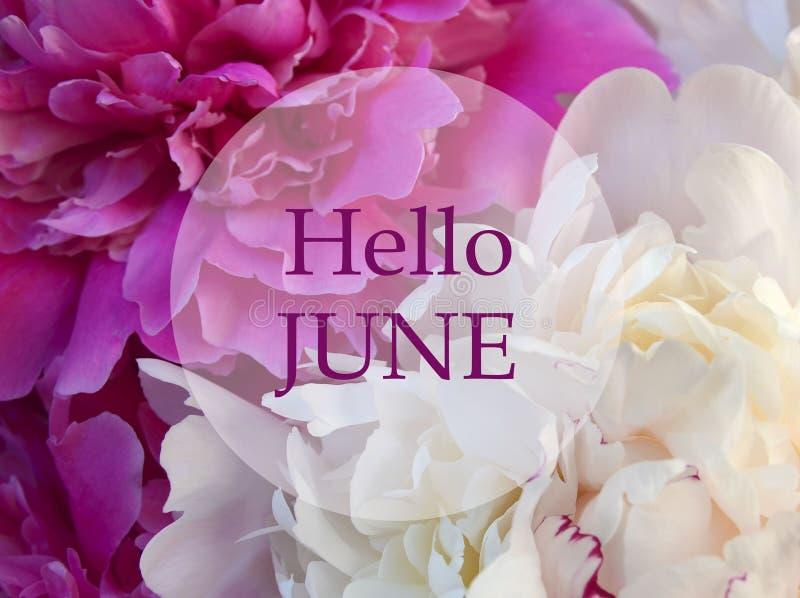 Ciao giugno Accogliere favorevolmente carta con testo sul fondo floreale naturale della peonia rosa e bianca Concetto di estate fotografie stock