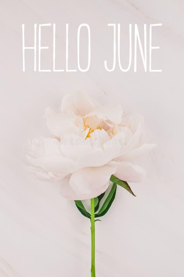 Ciao messaggio di giugno con il fiore rosa della peonia fotografia stock