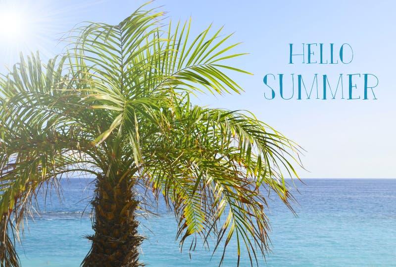 Ciao messaggio di vacanze estive con la palma sulla spiaggia dall'oceano fotografie stock