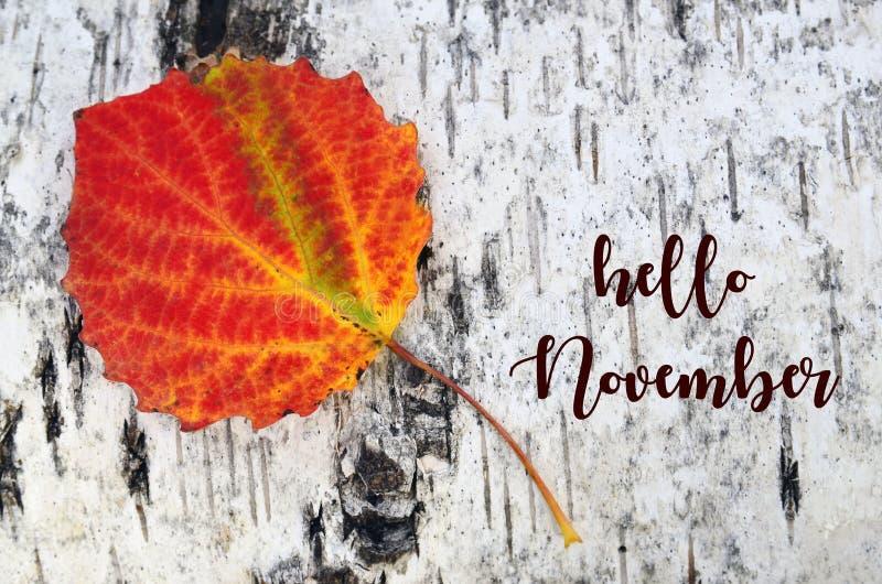 Ciao novembre Foglia variopinta dell'albero della tremula su un fondo della corteccia di betulla bianca Concetto di stagione di c immagini stock libere da diritti