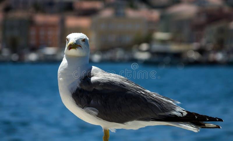 Ciao piccolo uccello fotografia stock