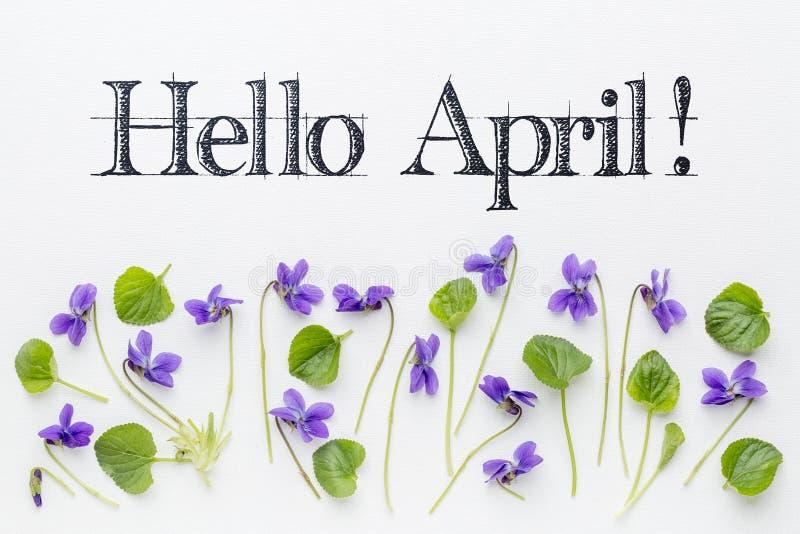Ciao saluti di aprile con i fiori della viola immagini stock