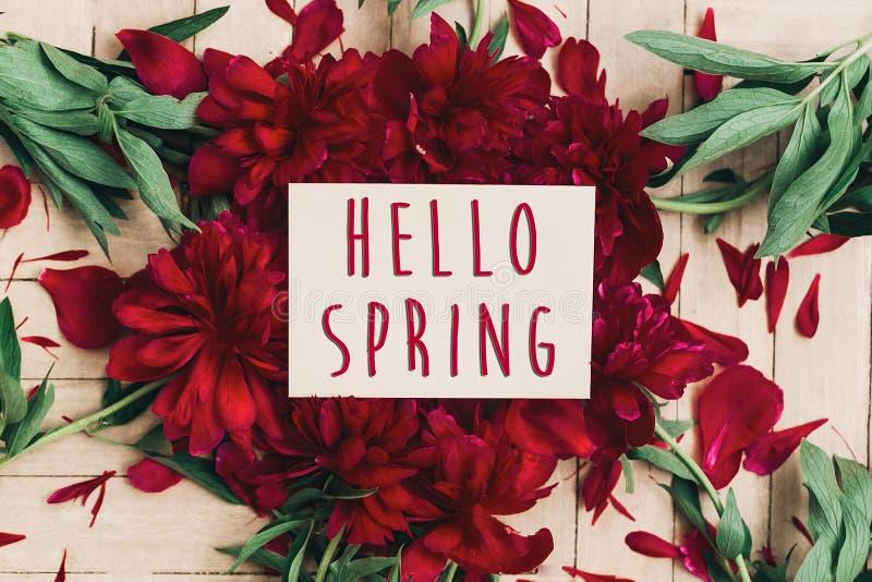 Ciao segno del testo della molla sulle belle peonie rosse che fioriscono sul briciolo fotografia stock