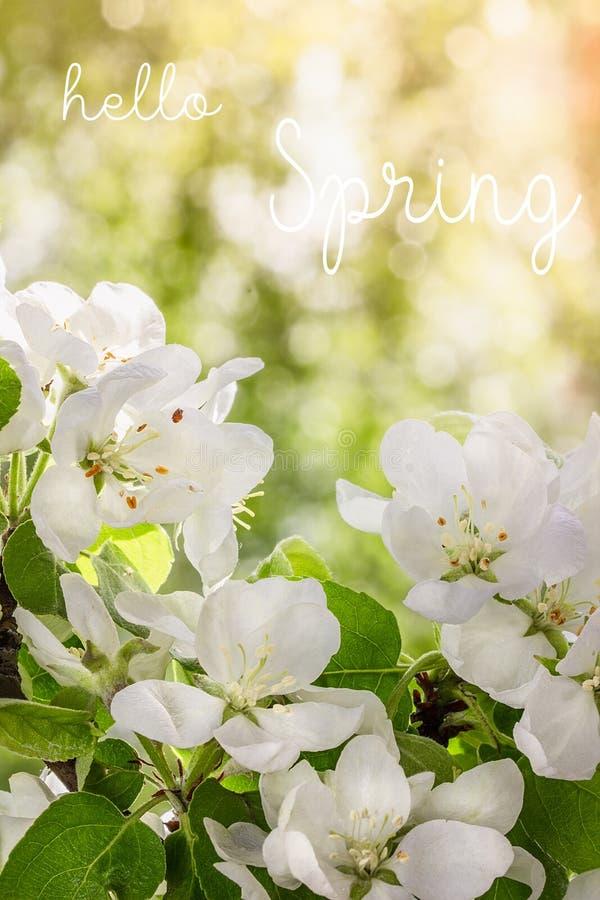 Ciao testo della molla Di melo in primavera in anticipo fotografie stock