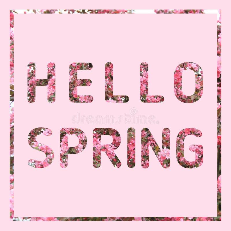 Ciao testo della primavera sul fondo di rosa pastello illustrazione vettoriale
