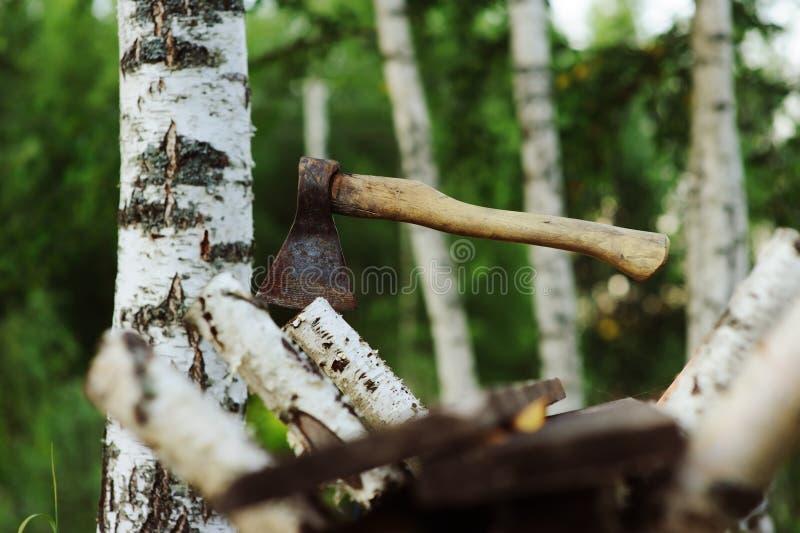 Ciapanie brzozy drzewo z cioską dla łupki z lasem na tle zdjęcia royalty free