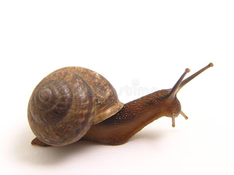 ciarki ślimaka zdjęcie stock