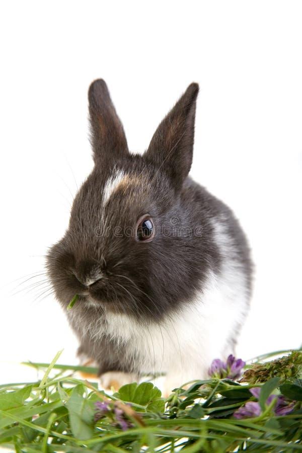 Cibo del coniglietto fotografie stock libere da diritti