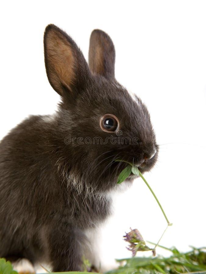 Cibo del coniglietto immagine stock