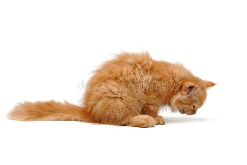 Cibo del gatto immagini stock