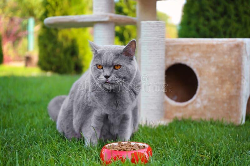 Cibo di peso eccessivo divertente del gatto fotografie stock