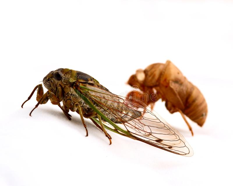 Cicada and casting stock images