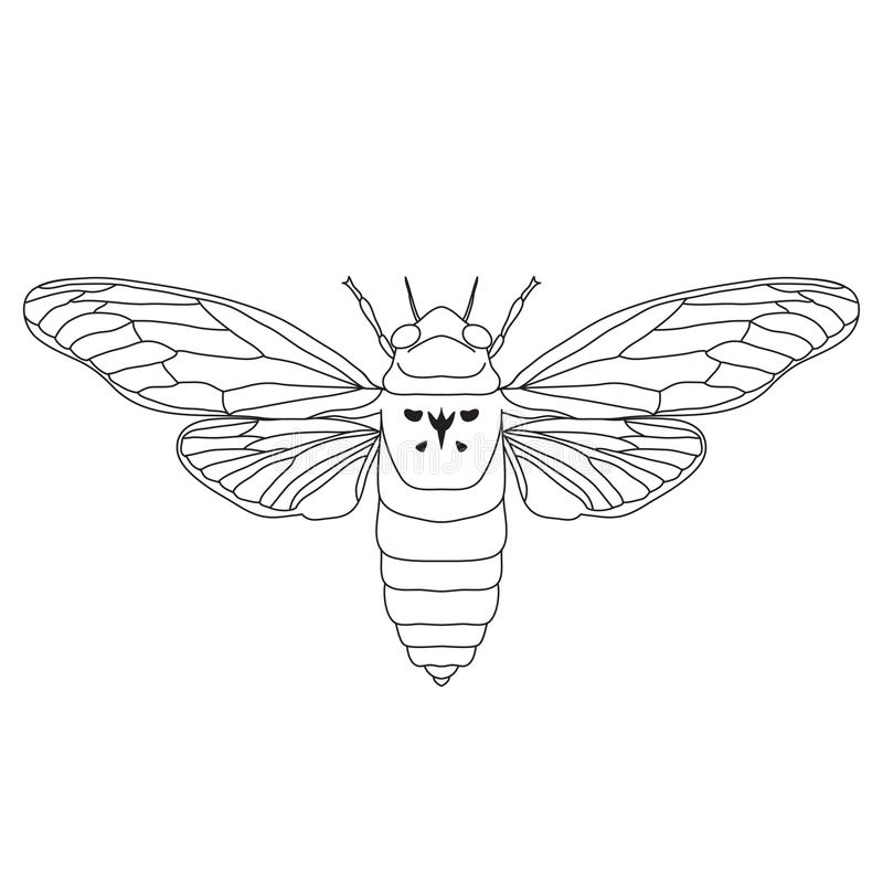 Cicada. Cicadidae. Sketch of cicada. cicada. Isolated on white background. cicada Design for coloring book. hand-drawn cicada. Vector illustration stock illustration