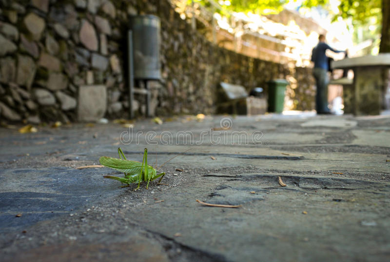 Cicada on the ground looking for a man stock image
