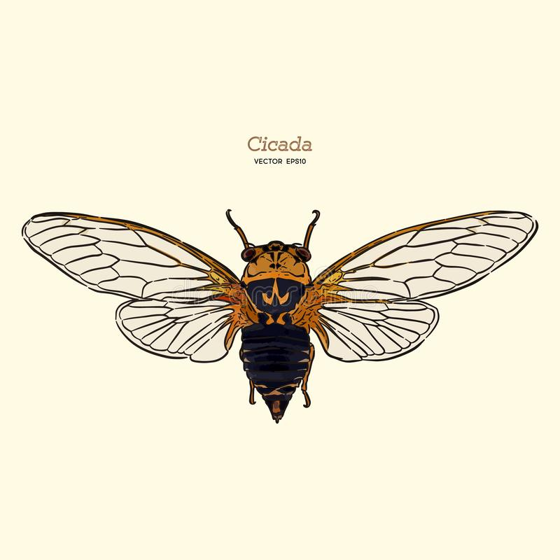 Cicada, hand draw vector. Cicada, hand draw sketch vector. Insect stock illustration