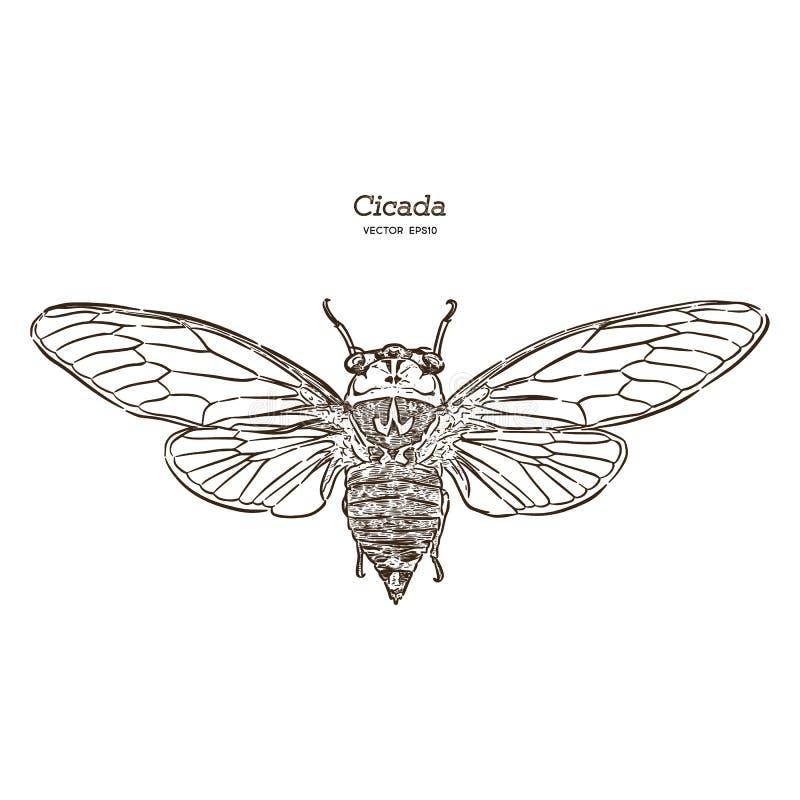 Free Cicada, Hand Draw Sketch Vector Stock Photo - 149916850