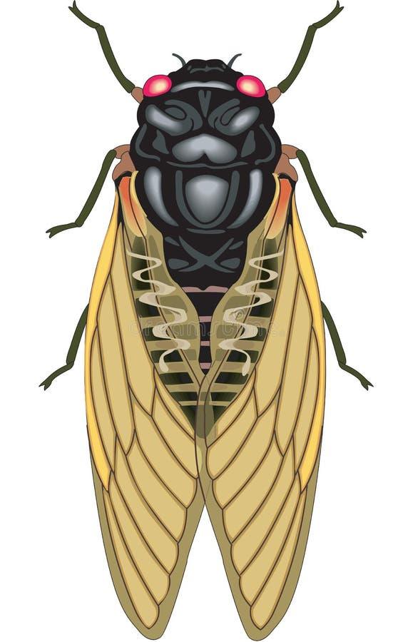 Free Cicada Vector Illustration Stock Photography - 134088642