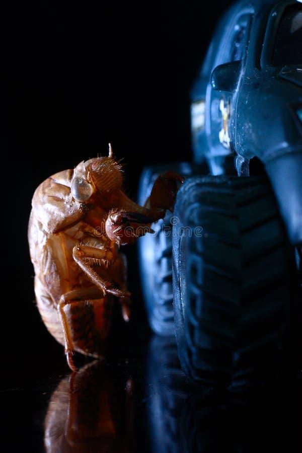 Cicadae di Periostracum e modello del suv fotografia stock libera da diritti