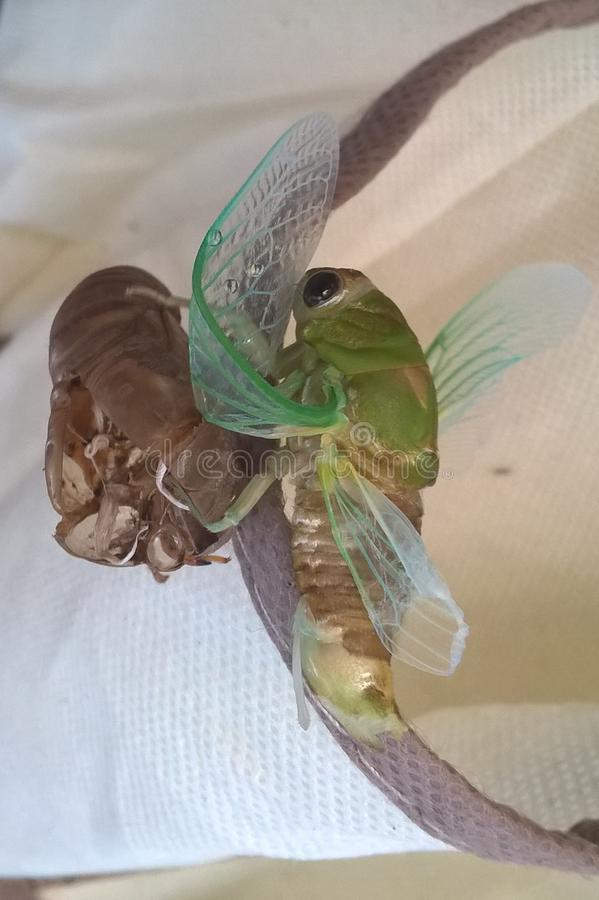 Cicadas stock photos