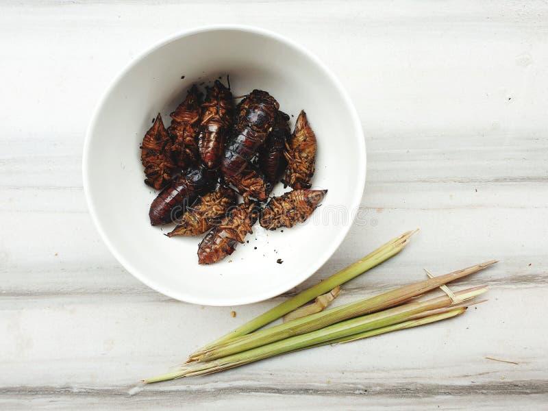 cicade voor snackmaaltijd royalty-vrije stock foto