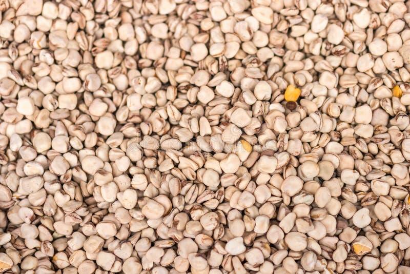Cicerchia Trawa groch, chickling groch, Indiański groch, wyka, słodki pe fotografia royalty free