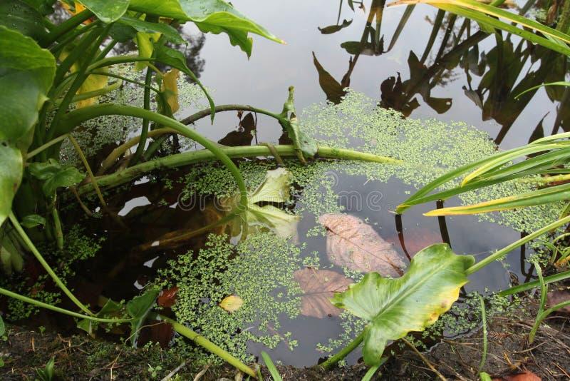Cicha stojąca woda lasowy jezioro Jesień w Wicklow, Irlandia zdjęcie royalty free