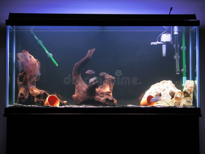 Cichlid Tank royalty free stock photos