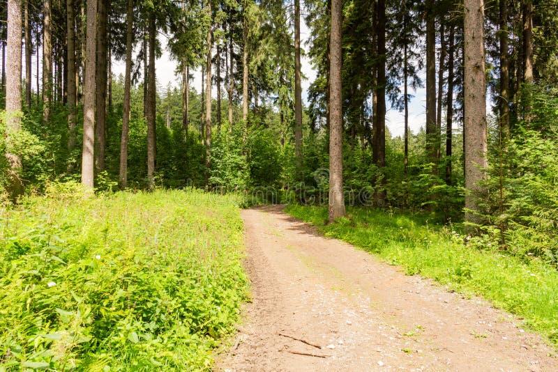 Ciclagem na floresta da natureza em um dia chuvoso Estrada na natureza da floresta Forest Road verde nave Estrada Ambiente natura fotos de stock
