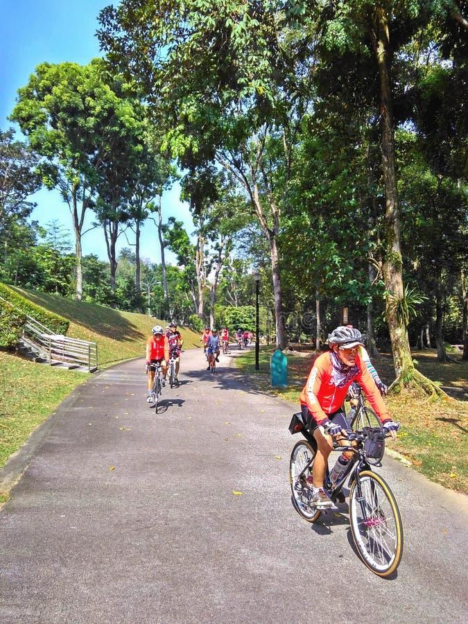 Ciclagem no parque natural de Bukit Batok foto de stock royalty free