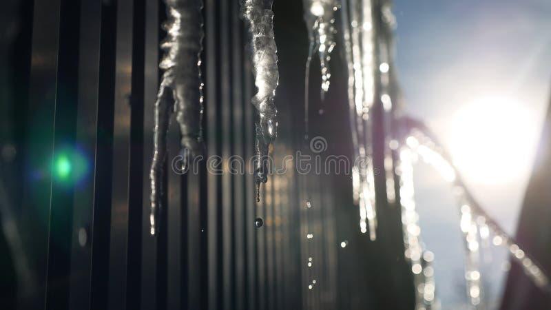 水Cicles滴滴下在抽象蓝色冬天冰背景冻下 库存图片