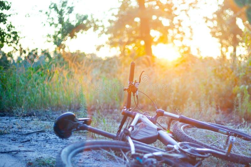 Ciclismo di montagna di mattina, alba sulla natura nel legno mentre facendo gli sport, stile di vita fotografia stock