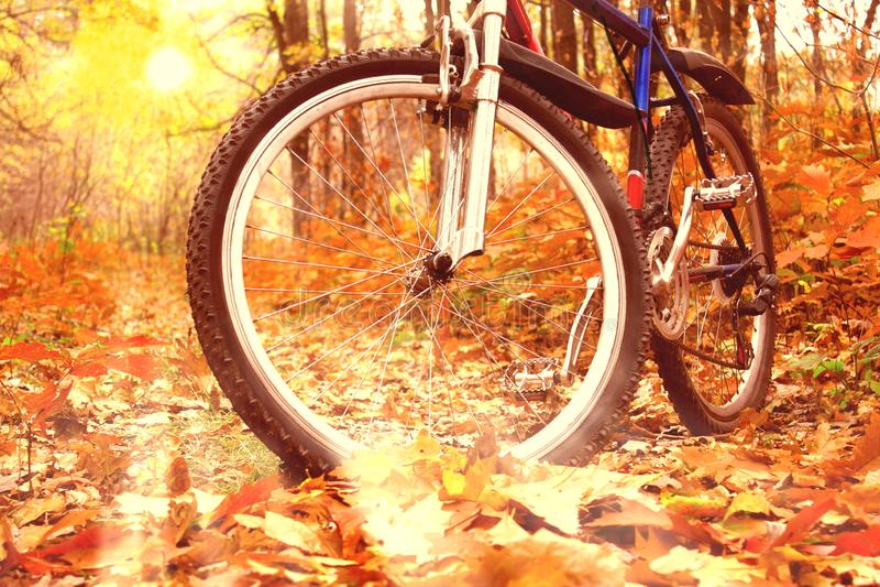 Ciclismo di montagna nella foresta di autunno fotografia stock