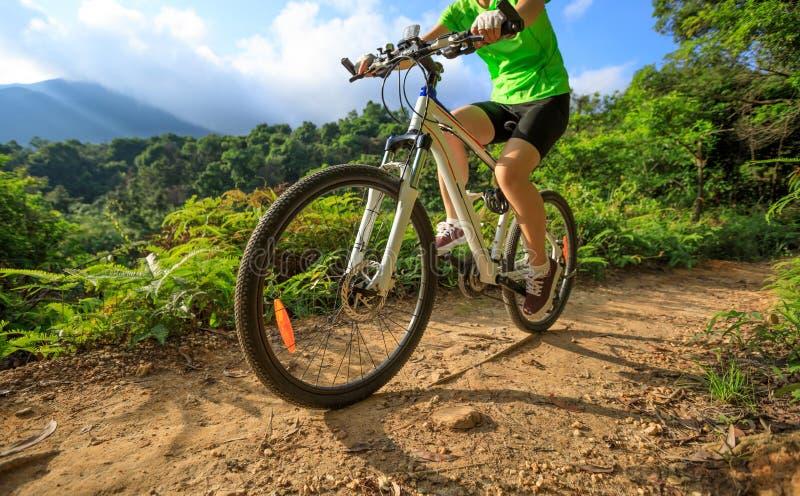 Ciclismo do ciclista na fuga da floresta foto de stock