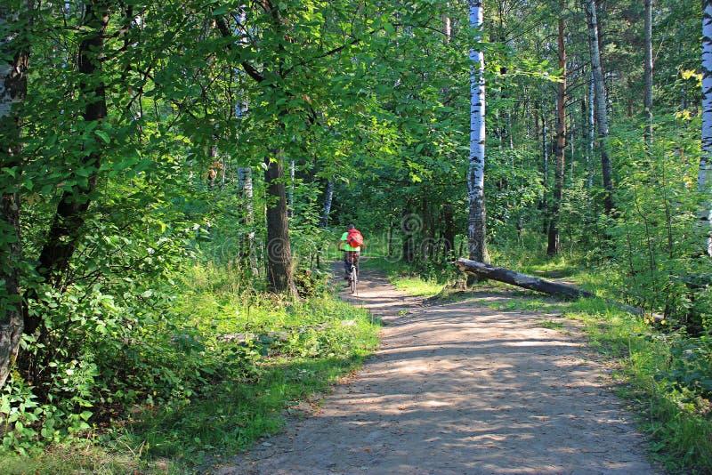 Ciclismo en una mañana soleada en el bosque imagen de archivo libre de regalías