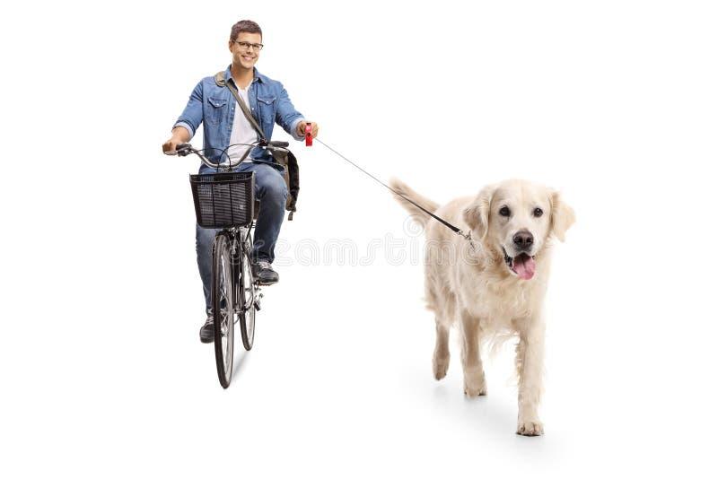 Ciclismo novo do indivíduo com um cão do retreiver de Labrador foto de stock