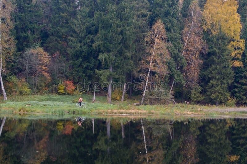 Ciclista en bosque del otoño fotos de archivo