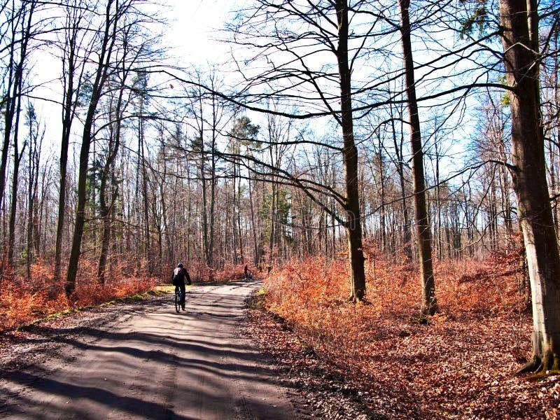 Ciclista na floresta da mola fotografia de stock royalty free