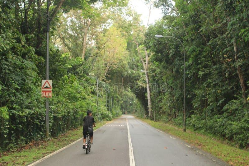 Ciclista nella riserva naturale del parco di Singapore fotografia stock libera da diritti