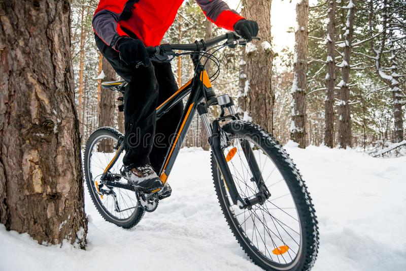 Ciclista no Mountain bike vermelho da equitação no inverno bonito Forest Adventure, no esporte e no conceito do ciclismo de Endur fotos de stock