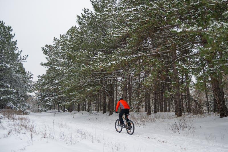Ciclista no Mountain bike vermelho da equitação no inverno bonito Forest Extreme Sport e no conceito Biking de Enduro imagem de stock