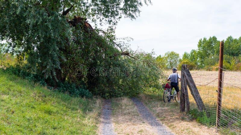 Ciclista que evita uma árvore caída de um forte vento que encontra-se em uma estrada de terra em um campo em República Federal da foto de stock royalty free