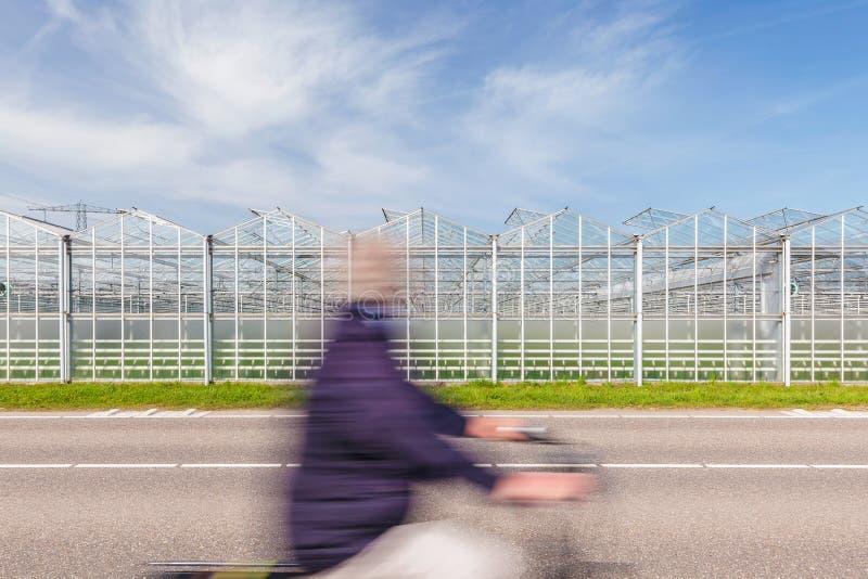 Ciclista que pasa un invernadero holandés en una carretera de asfalto imagen de archivo libre de regalías