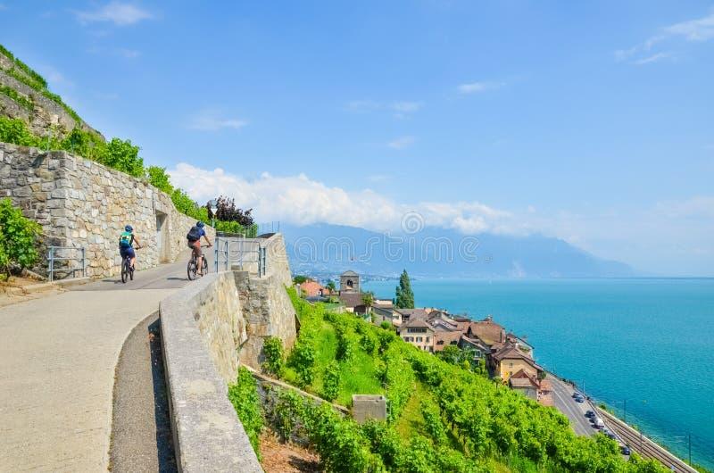 Ciclista sul percorso scenico lungo le vigne a terrazze verdi sui pendii adiacente al lago geneva, Svizzera Regione del vino di L immagini stock libere da diritti