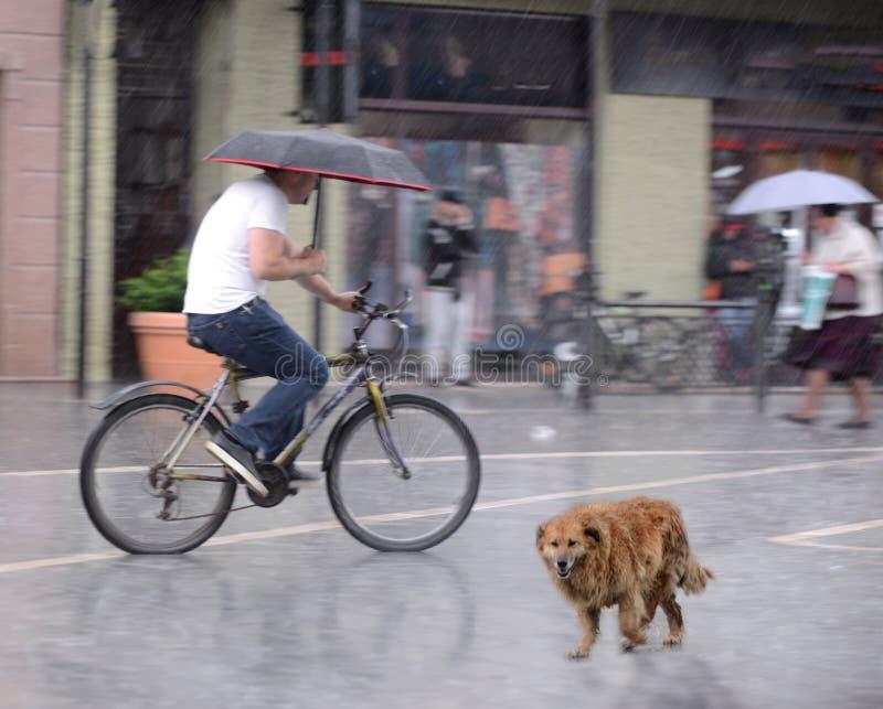 Ciclista sulla carreggiata della citt? nel mosso nel giorno piovoso immagine stock